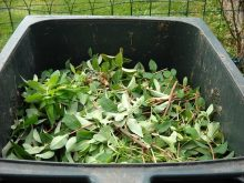 bioodpad, třídění