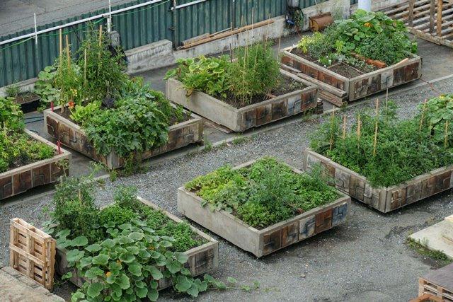 Komunitní zahrada