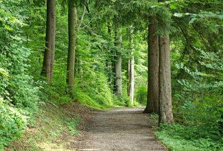 stezka, naučná stezka, příroda