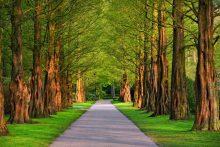 park, zeleň